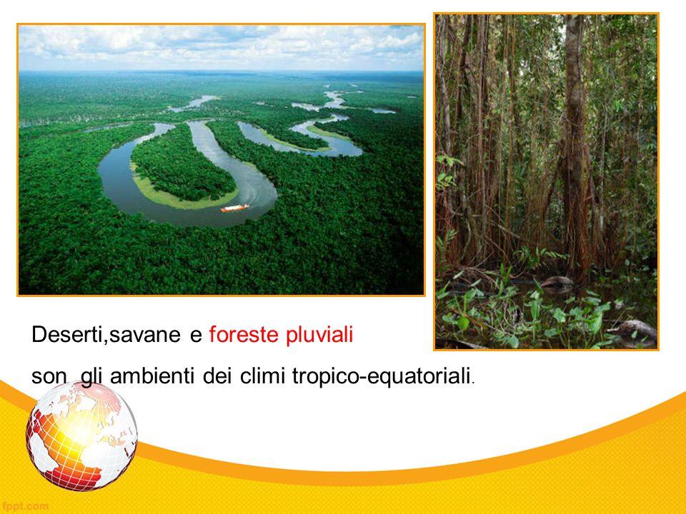 Deserti,savane e foreste pluviali son gli ambienti dei climi tropico-equatoriali.