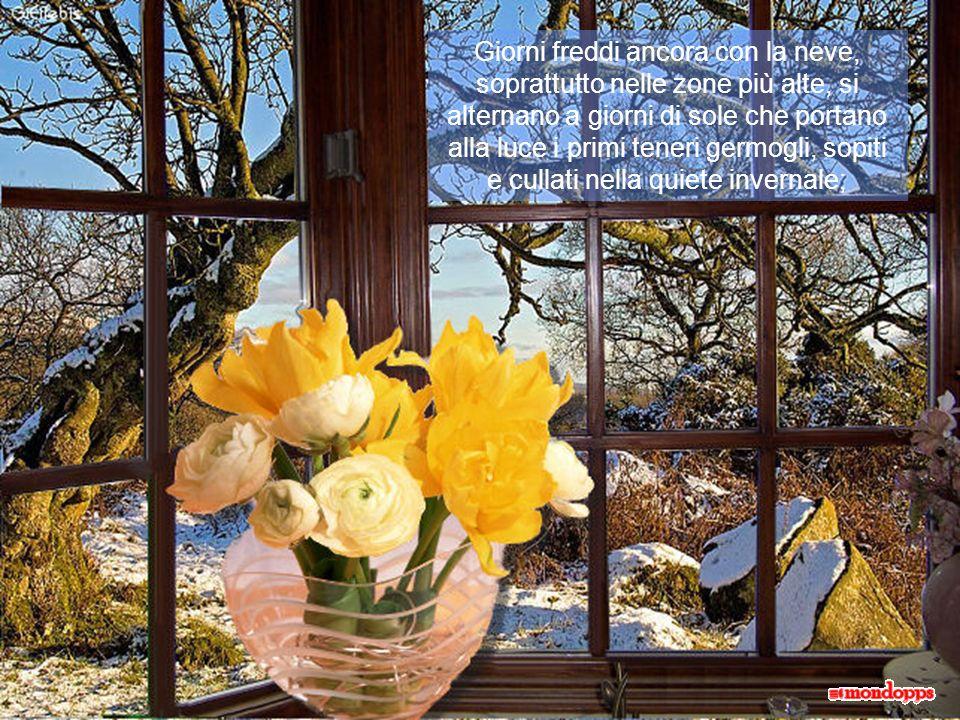 Giorni freddi ancora con la neve, soprattutto nelle zone più alte, si alternano a giorni di sole che portano alla luce i primi teneri germogli, sopiti e cullati nella quiete invernale;