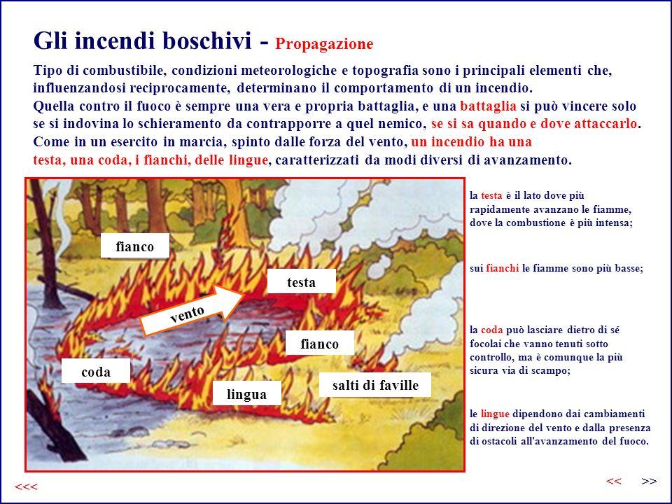 Gli incendi boschivi - Propagazione <<< Tipo di combustibile, condizioni meteorologiche e topografia sono i principali elementi che, influenzandosi reciprocamente, determinano il comportamento di un incendio.
