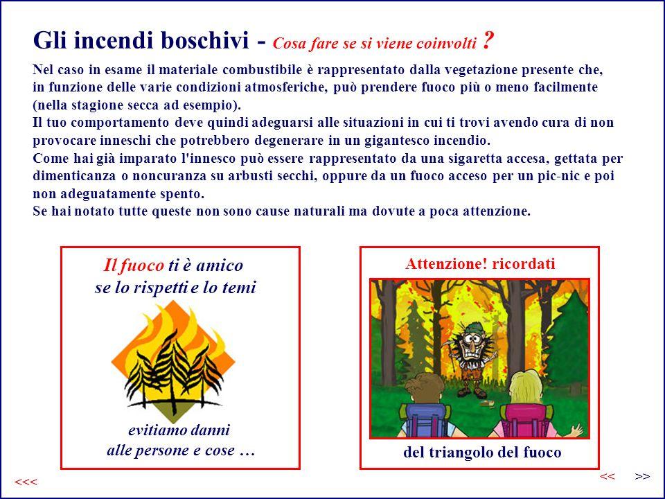 Gli incendi boschivi - Cosa fare se si viene coinvolti .