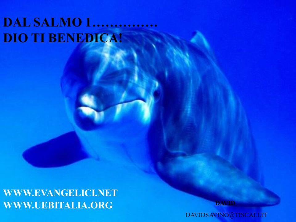 DAL SALMO 1…………… DIO TI BENEDICA! DAVIDSAVINO@TISCALI.IT DAVID WWW.EVANGELICI.NET WWW.UEBITALIA.ORG