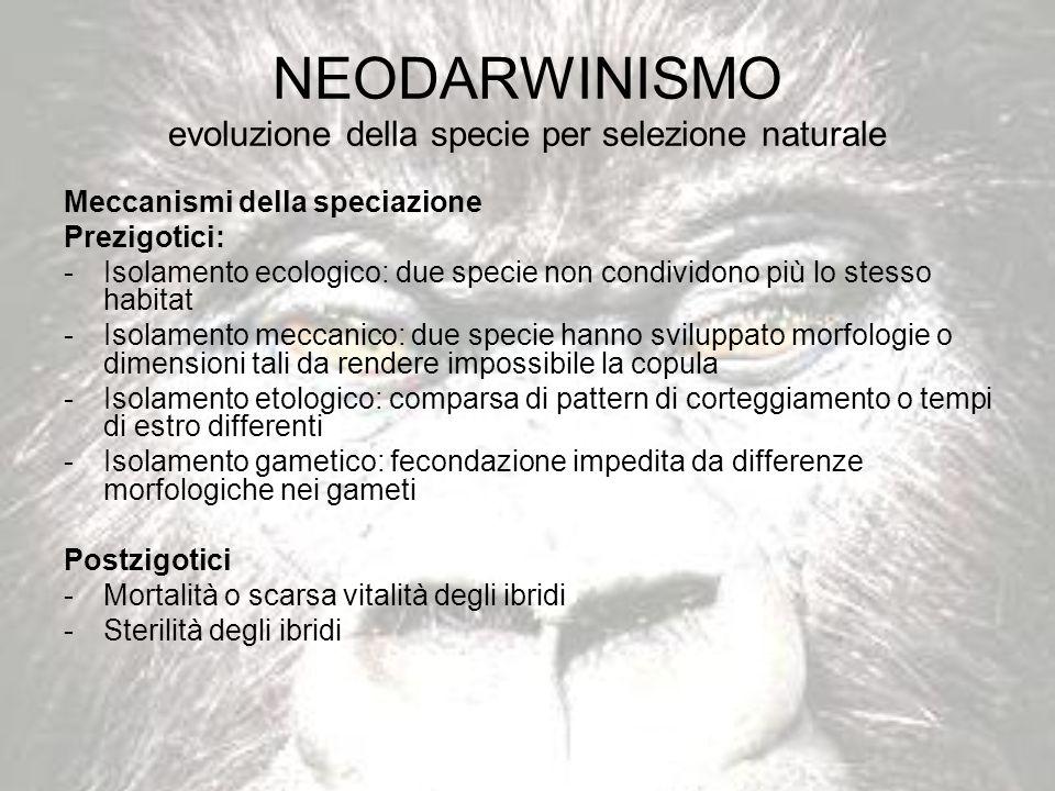 NEODARWINISMO evoluzione della specie per selezione naturale Meccanismi della speciazione Prezigotici: -Isolamento ecologico: due specie non condivido