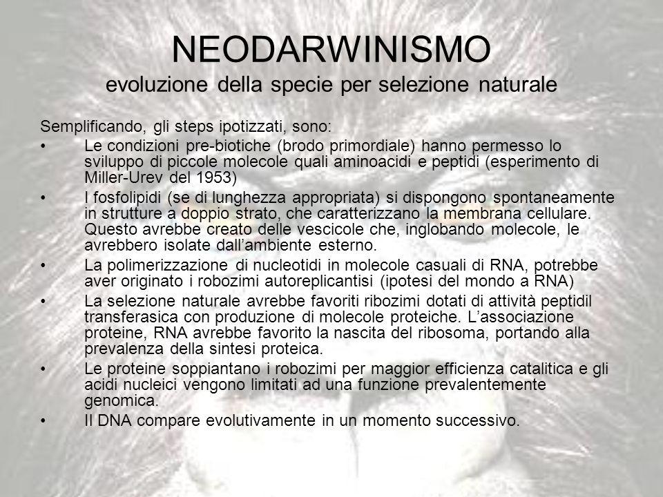 NEODARWINISMO evoluzione della specie per selezione naturale Semplificando, gli steps ipotizzati, sono: Le condizioni pre-biotiche (brodo primordiale)