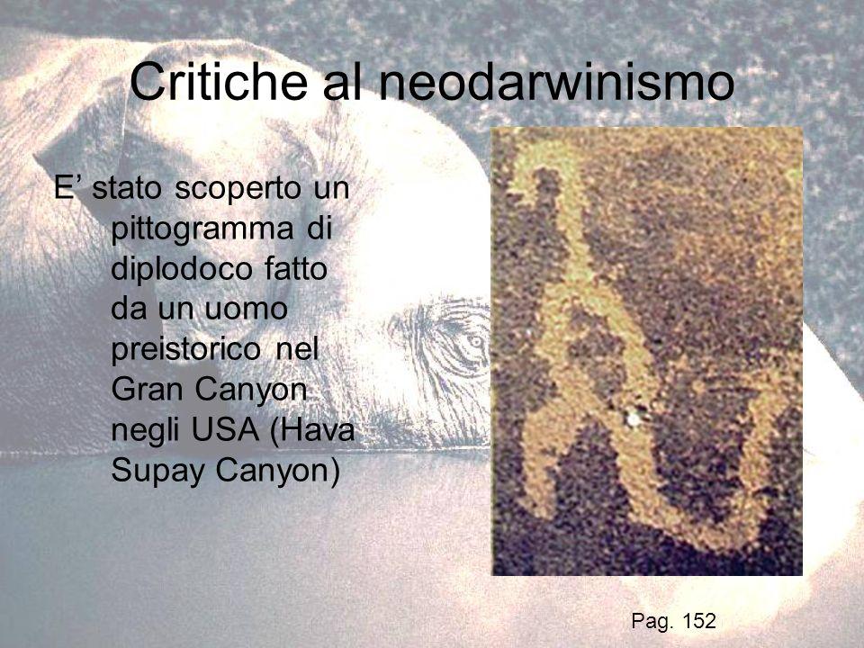 Critiche al neodarwinismo E stato scoperto un pittogramma di diplodoco fatto da un uomo preistorico nel Gran Canyon negli USA (Hava Supay Canyon) Pag.