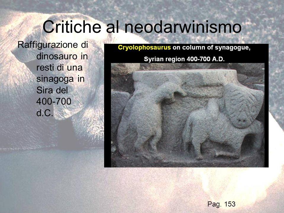 Critiche al neodarwinismo Raffigurazione di dinosauro in resti di una sinagoga in Sira del 400-700 d.C. Pag. 153