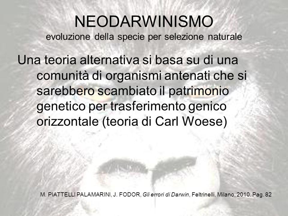 NEODARWINISMO evoluzione della specie per selezione naturale Una teoria alternativa si basa su di una comunità di organismi antenati che si sarebbero