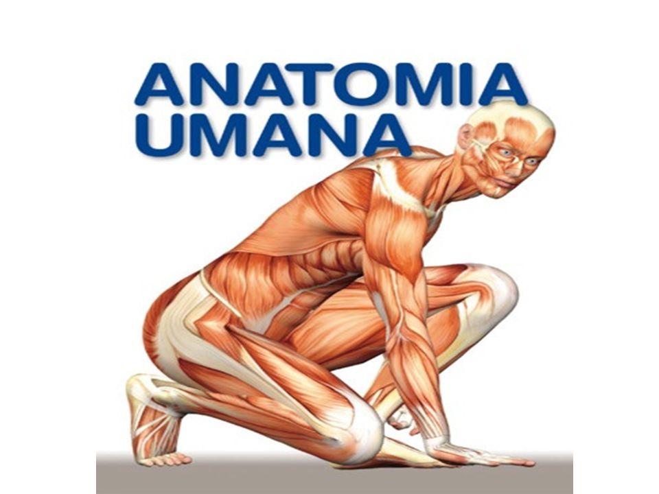 ANATOMIA L Anatomia è la scienza che studia la forma e la struttura degli organi La Fisiologia è la scienza che studia il funzionamento degli organi viventi