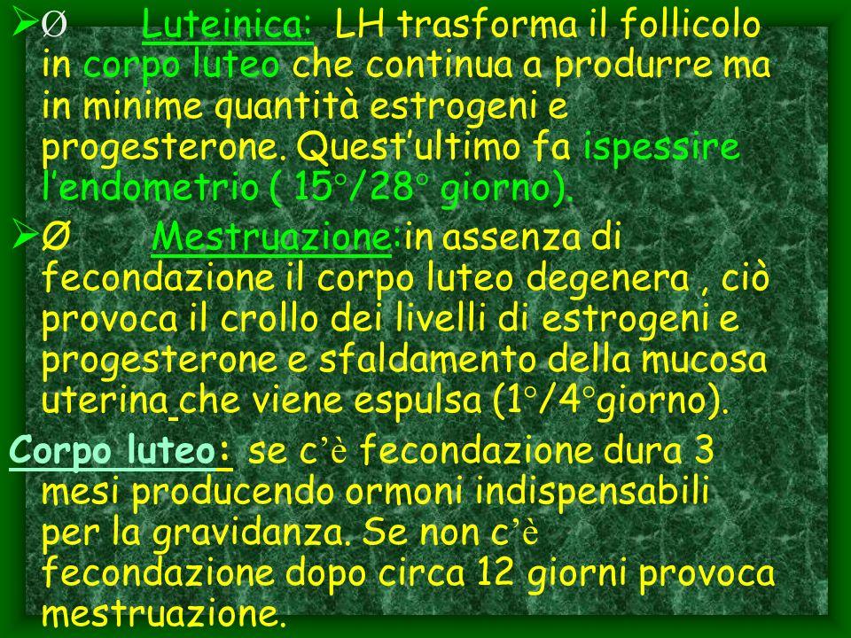 Ø Luteinica: LH trasforma il follicolo in corpo luteo che continua a produrre ma in minime quantità estrogeni e progesterone. Questultimo fa ispessire