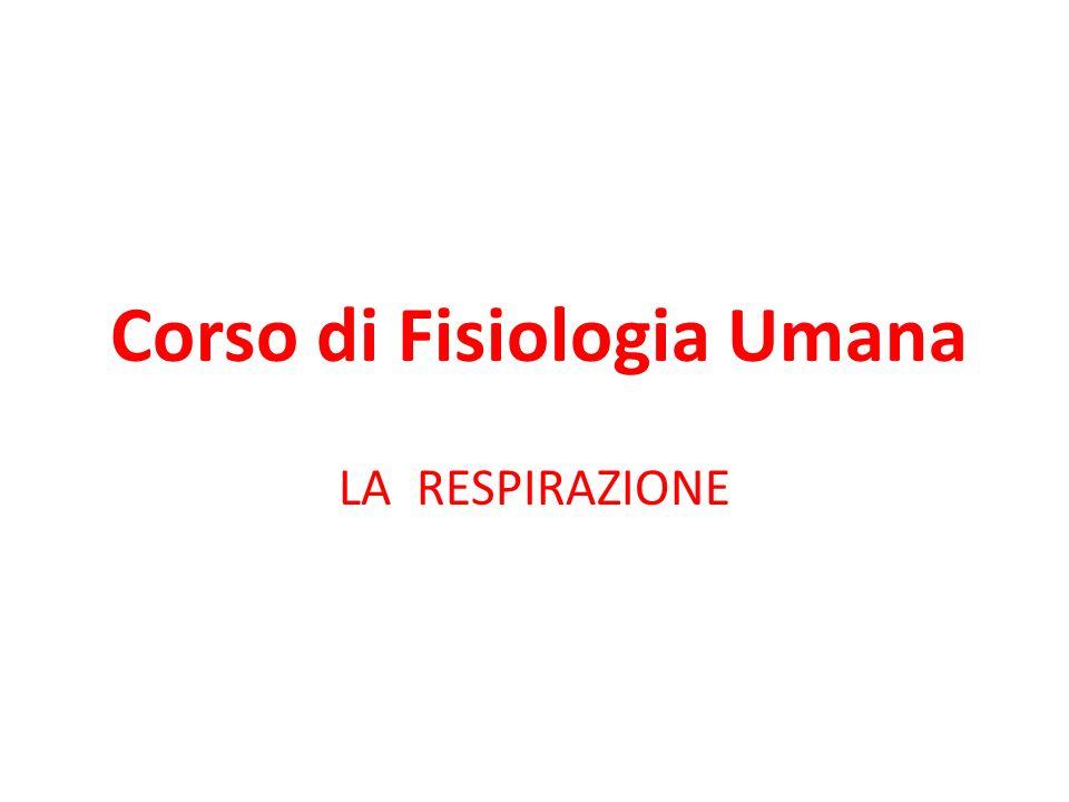 Corso di Fisiologia Umana LA RESPIRAZIONE