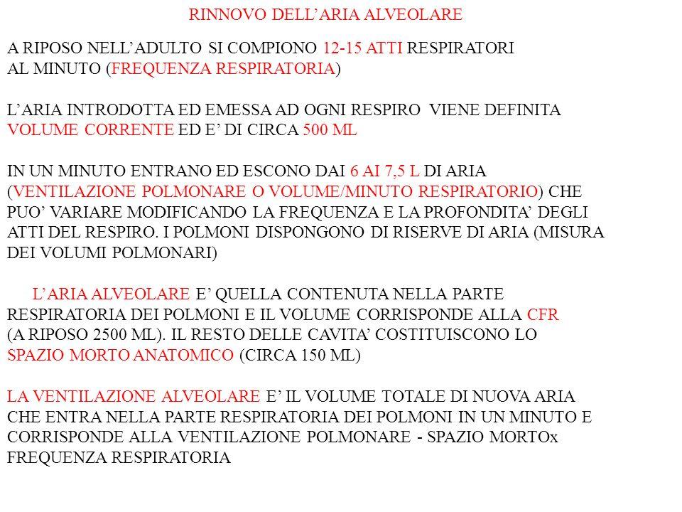 RINNOVO DELLARIA ALVEOLARE A RIPOSO NELLADULTO SI COMPIONO 12-15 ATTI RESPIRATORI AL MINUTO (FREQUENZA RESPIRATORIA) LARIA INTRODOTTA ED EMESSA AD OGN