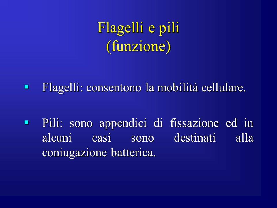 Flagelli e pili (funzione) Flagelli: consentono la mobilità cellulare. Flagelli: consentono la mobilità cellulare. Pili: sono appendici di fissazione