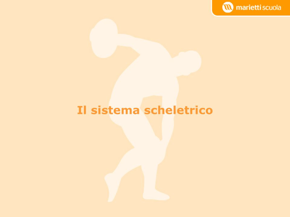 Scapola Clavicola Omero Lo scheletro appendicolare: il cingolo scapolare