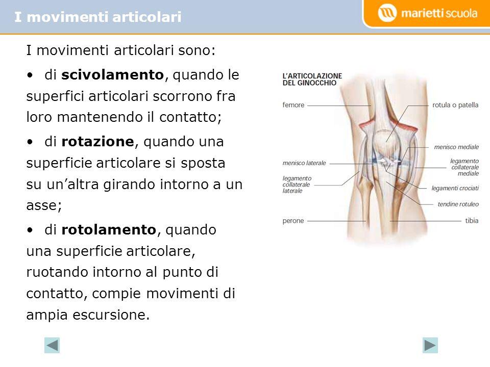 I movimenti articolari I movimenti articolari sono: di scivolamento, quando le superfici articolari scorrono fra loro mantenendo il contatto; di rotaz