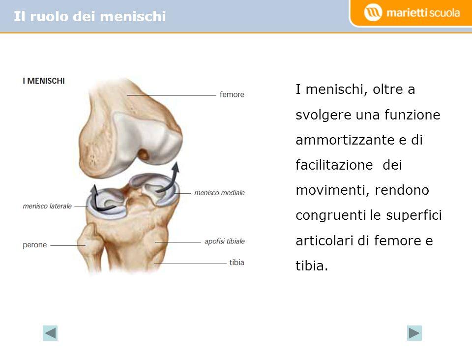 Il ruolo dei menischi I menischi, oltre a svolgere una funzione ammortizzante e di facilitazione dei movimenti, rendono congruenti le superfici articolari di femore e tibia.