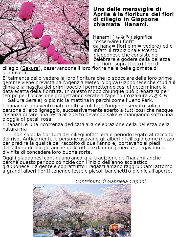 Una delle meraviglie di Aprile è la fioritura dei fiori di ciliegio in Giappone chiamata Hanami. Hanami ( ) significa osservare i fiori da hana= fiori