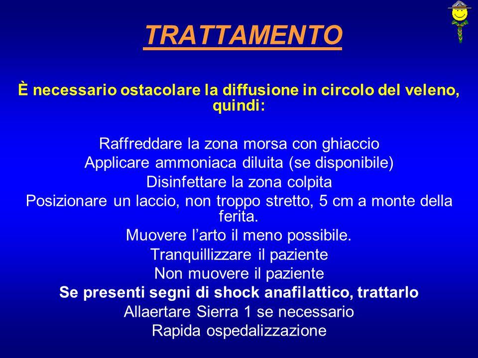 MORSO DI VIPERA La vipera è lunico serpente velenoso presente in Italia.