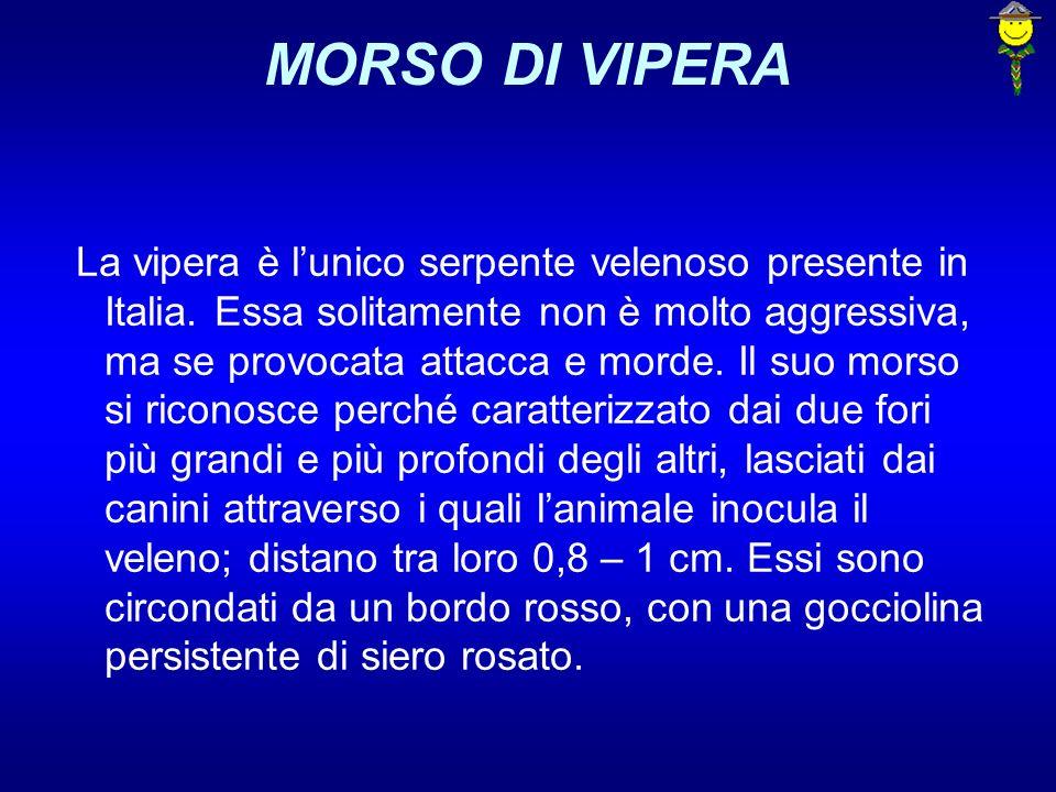 MORSO DI VIPERA La vipera è lunico serpente velenoso presente in Italia. Essa solitamente non è molto aggressiva, ma se provocata attacca e morde. Il