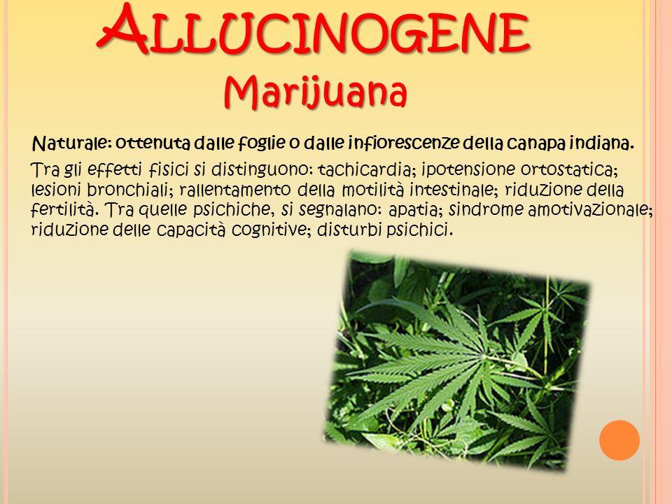 A LLUCINOGENE Marijuan Marijuana Naturale: ottenuta dalle foglie o dalle infiorescenze della canapa indiana. Tra gli effetti fisici si distinguono: ta