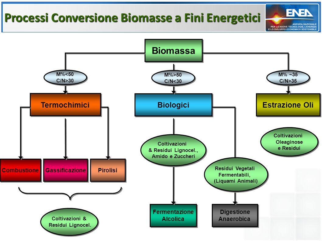 Biomassa Estrazione Oli Termochimici Biologici M%<50 C/N>30 M%<50 C/N>30 M%>50 C/N<30 M%>50 C/N<30 M% ~35 C/N>35 M% ~35 C/N>35 Digestione Anaerobica Digestione Anaerobica Fermentazione Alcolica Fermentazione Alcolica Coltivazioni & Residui Lignocel.