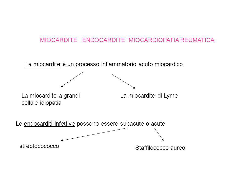 MIOCARDITE ENDOCARDITE MIOCARDIOPATIA REUMATICA La miocardite è un processo infiammatorio acuto miocardico La miocardite a grandi cellule idiopatia La miocardite di Lyme Le endocarditi infettive possono essere subacute o acute streptocococco Staffilococco aureo