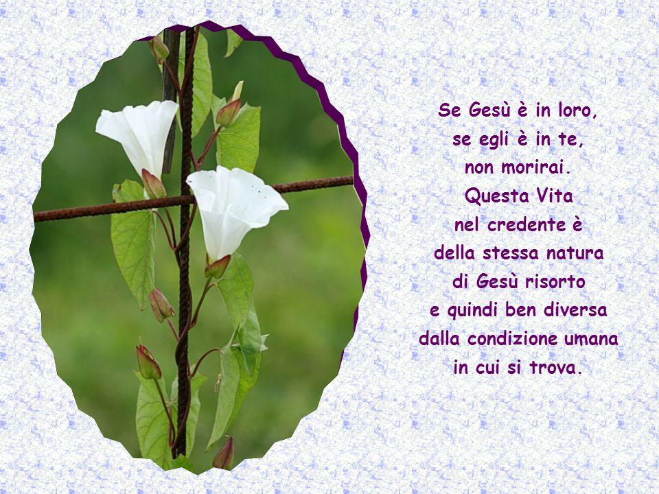 Già adesso, nel presente, egli è per tutti i credenti, quella Vita divina, ineffabile, eterna, che non morirà mai.