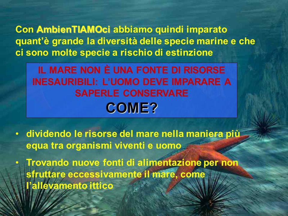 AmbienTIAMOci Con AmbienTIAMOci abbiamo quindi imparato quantè grande la diversità delle specie marine e che ci sono molte specie a rischio di estinzione IL MARE NON È UNA FONTE DI RISORSE INESAURIBILI: LUOMO DEVE IMPARARE A SAPERLE CONSERVARECOME.