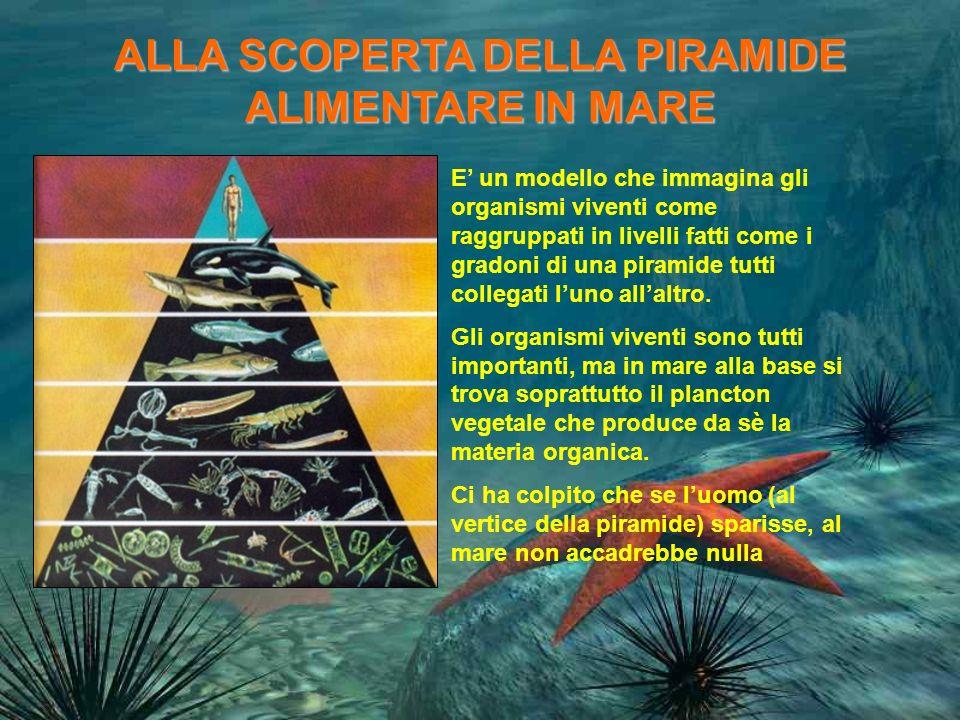 ALLA SCOPERTA DELLA PIRAMIDE ALIMENTARE IN MARE E un modello che immagina gli organismi viventi come raggruppati in livelli fatti come i gradoni di una piramide tutti collegati luno allaltro.