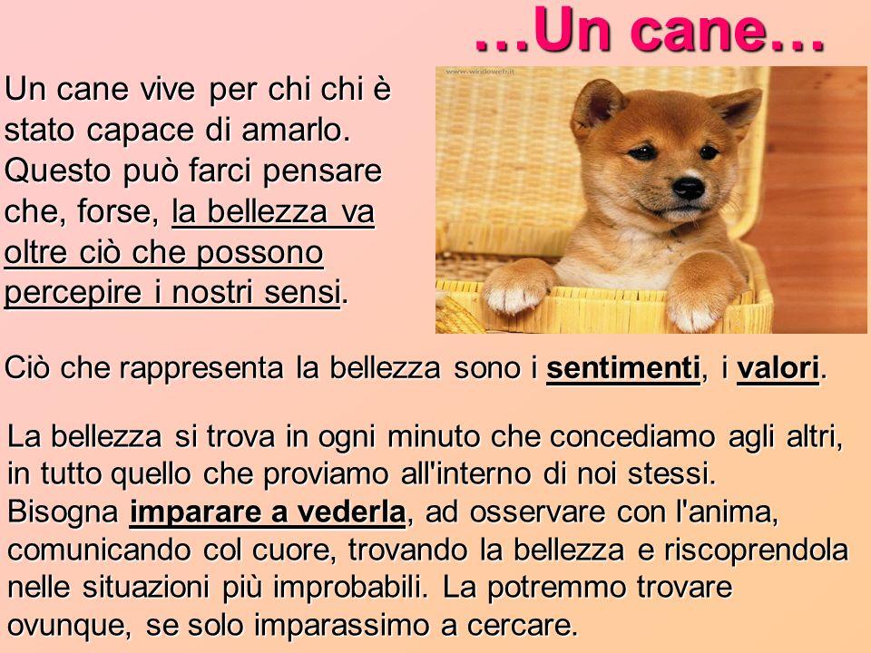 …Un cane… Ciò che rappresenta la bellezza sono i sentimenti, i valori.