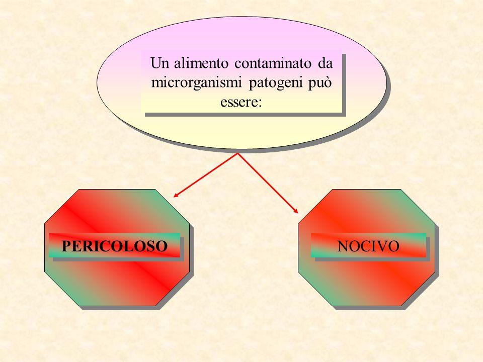 Associazione di Promozione Sociale Cucinaverarte No profit Organization Area Educational Relatore: Nicola Bruno prof.