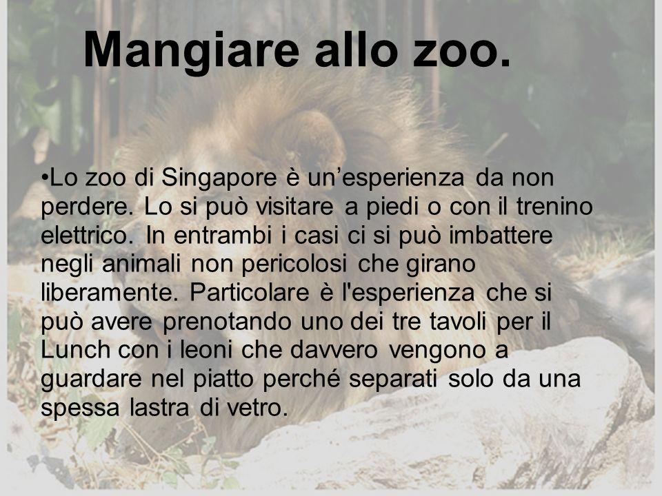 Lo zoo di Singapore è unesperienza da non perdere. Lo si può visitare a piedi o con il trenino elettrico. In entrambi i casi ci si può imbattere negli