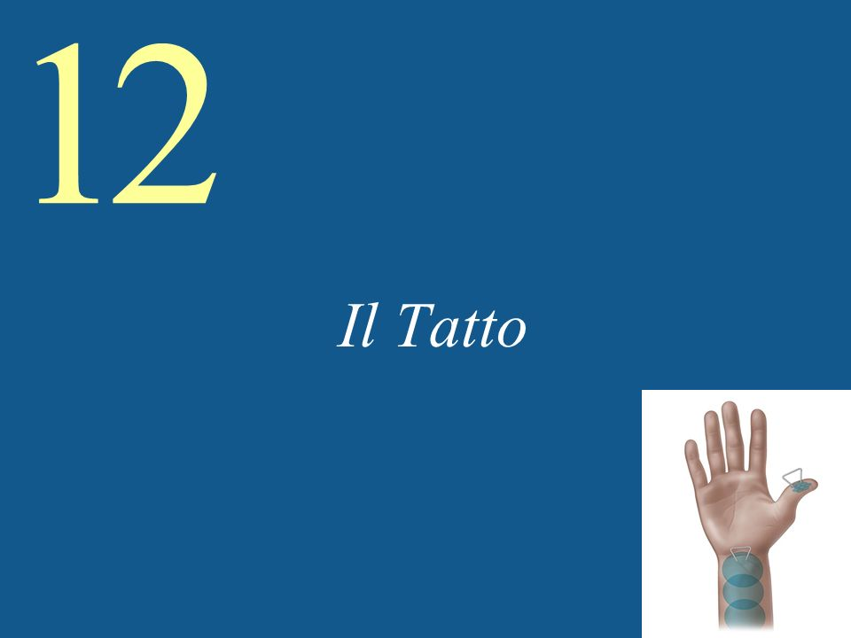 12 Tactile Sensitivity and Acuity (contd) Con quante precisione si possono risolvere dettagli tattili temporali.