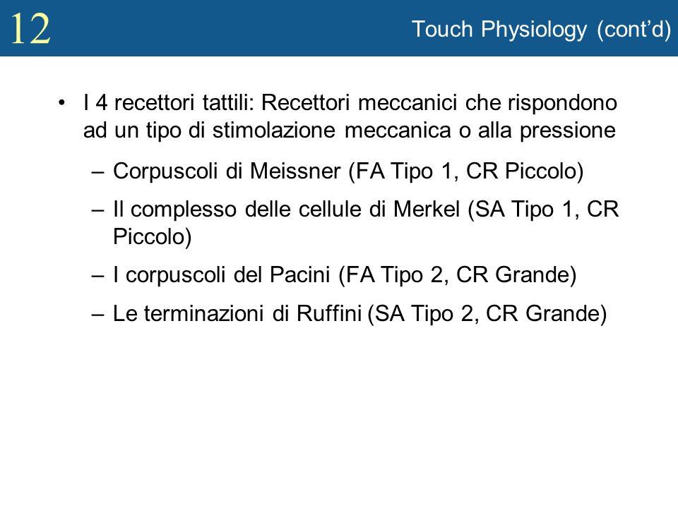 12 Touch Physiology (contd) I 4 recettori tattili: Recettori meccanici che rispondono ad un tipo di stimolazione meccanica o alla pressione –Corpuscol