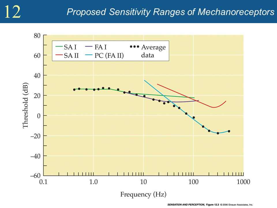 12 Proposed Sensitivity Ranges of Mechanoreceptors