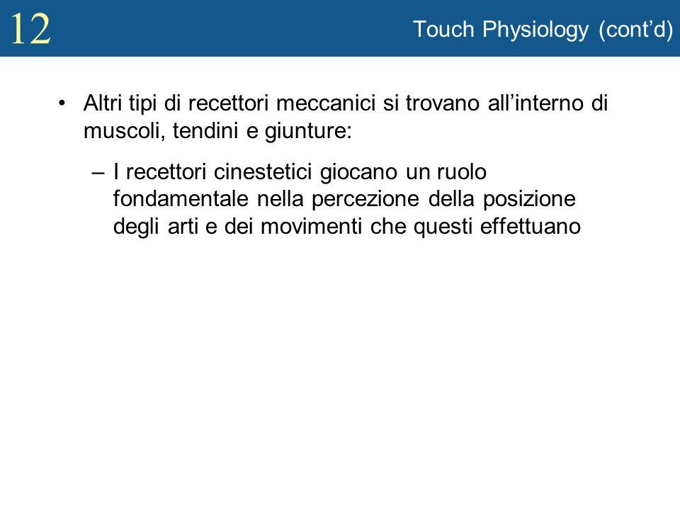 12 Touch Physiology (contd) Altri tipi di recettori meccanici si trovano allinterno di muscoli, tendini e giunture: –I recettori cinestetici giocano u