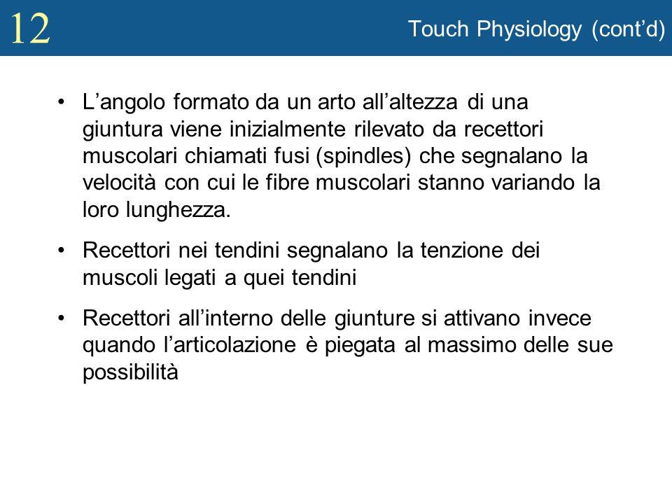 12 Touch Physiology (contd) Langolo formato da un arto allaltezza di una giuntura viene inizialmente rilevato da recettori muscolari chiamati fusi (sp