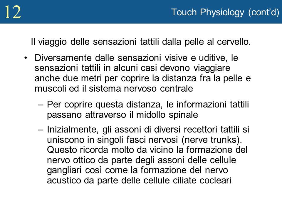 12 Touch Physiology (contd) Il viaggio delle sensazioni tattili dalla pelle al cervello. Diversamente dalle sensazioni visive e uditive, le sensazioni