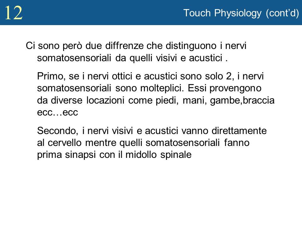 12 Touch Physiology (contd) Ci sono però due diffrenze che distinguono i nervi somatosensoriali da quelli visivi e acustici. Primo, se i nervi ottici