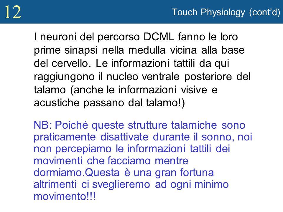 12 Touch Physiology (contd) I neuroni del percorso DCML fanno le loro prime sinapsi nella medulla vicina alla base del cervello. Le informazioni tatti