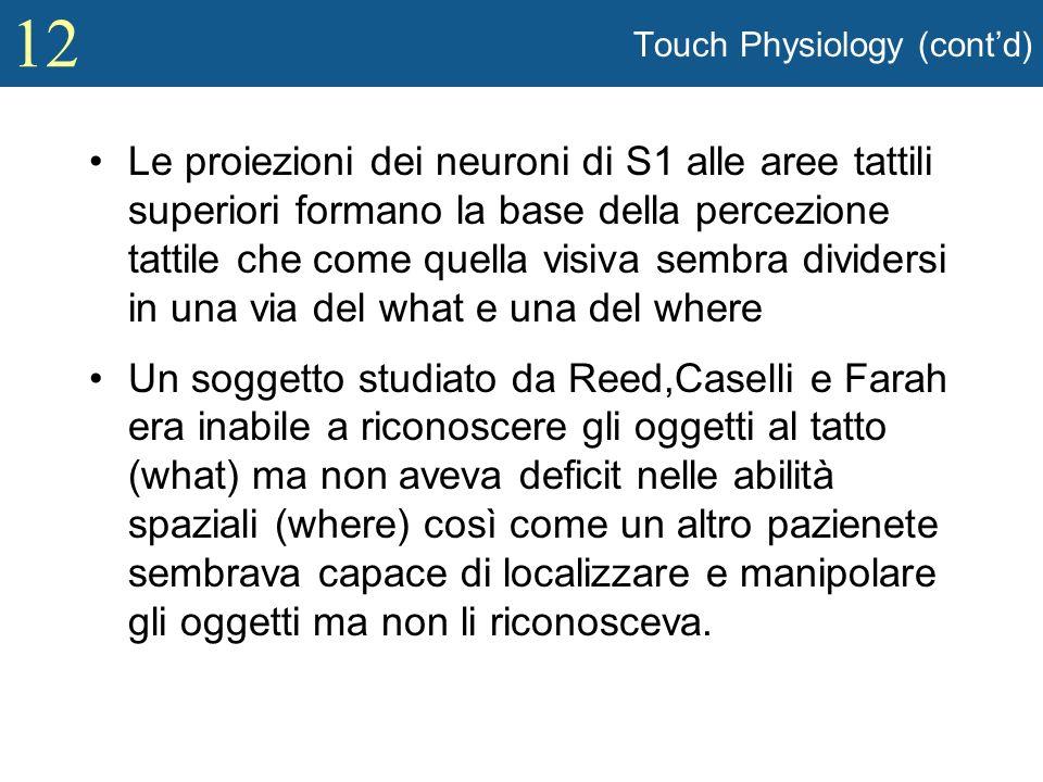 12 Touch Physiology (contd) Le proiezioni dei neuroni di S1 alle aree tattili superiori formano la base della percezione tattile che come quella visiv