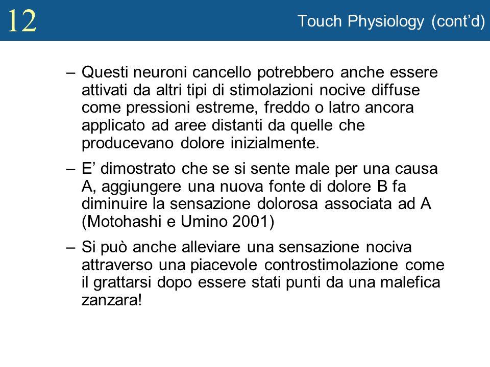 12 Touch Physiology (contd) –Questi neuroni cancello potrebbero anche essere attivati da altri tipi di stimolazioni nocive diffuse come pressioni estr
