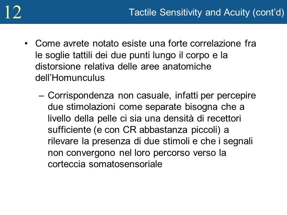 12 Tactile Sensitivity and Acuity (contd) Come avrete notato esiste una forte correlazione fra le soglie tattili dei due punti lungo il corpo e la dis