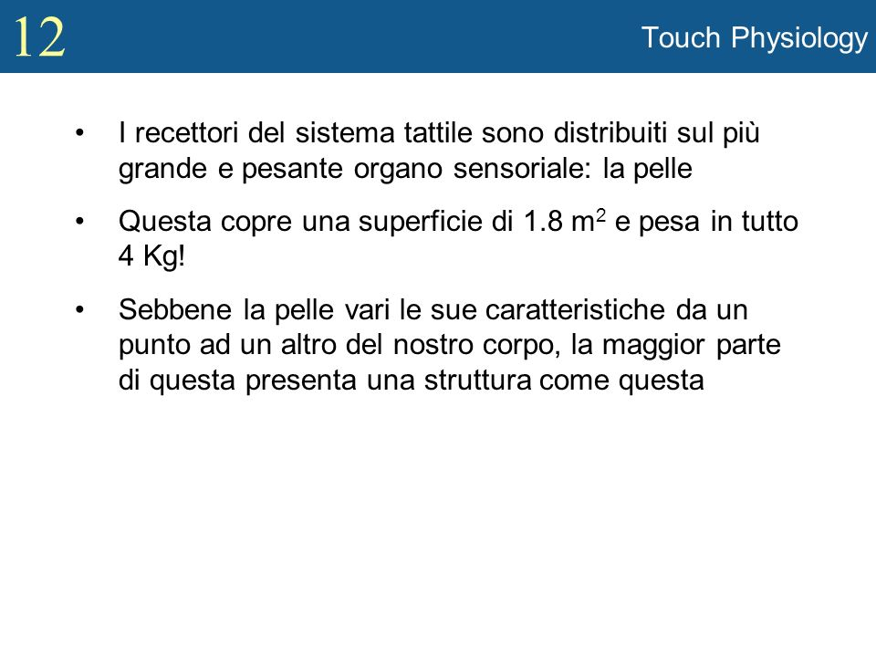 12 Tactile Sensitivity and Acuity (contd) Con quanta precisione possiamo percepire fini dettagli spaziali.