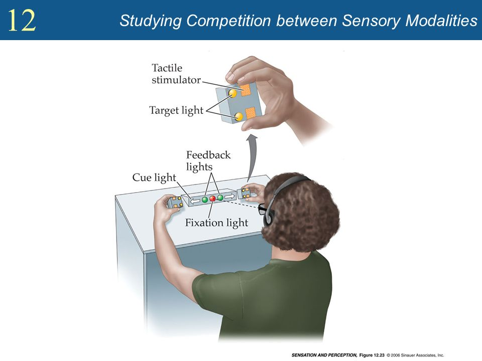 12 Studying Competition between Sensory Modalities