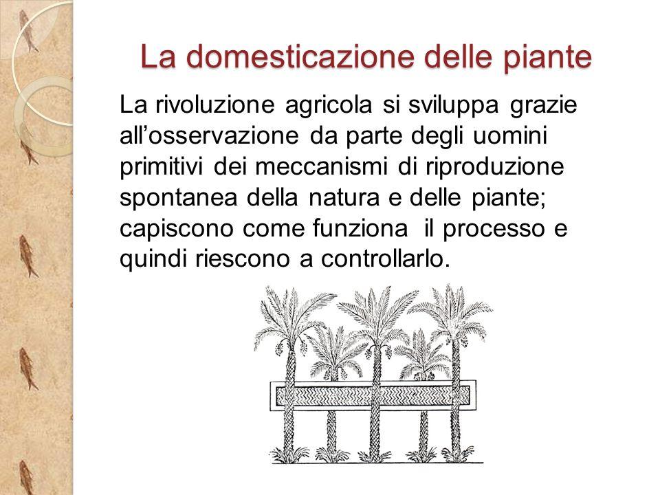 La rivoluzione agricola si sviluppa grazie allosservazione da parte degli uomini primitivi dei meccanismi di riproduzione spontanea della natura e delle piante; capiscono come funziona il processo e quindi riescono a controllarlo.