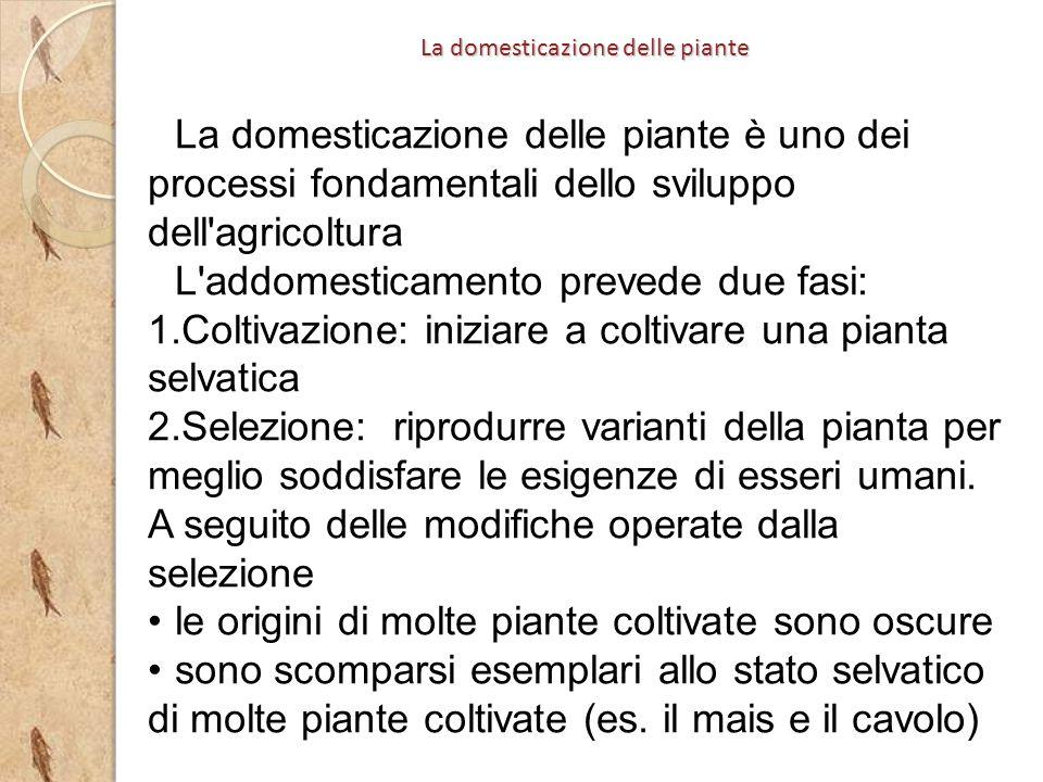 La domesticazione delle piante è uno dei processi fondamentali dello sviluppo dell'agricoltura L'addomesticamento prevede due fasi: 1.Coltivazione: in
