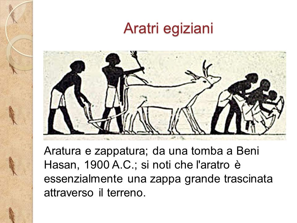 Aratri egiziani Aratura e zappatura; da una tomba a Beni Hasan, 1900 A.C.; si noti che l aratro è essenzialmente una zappa grande trascinata attraverso il terreno.