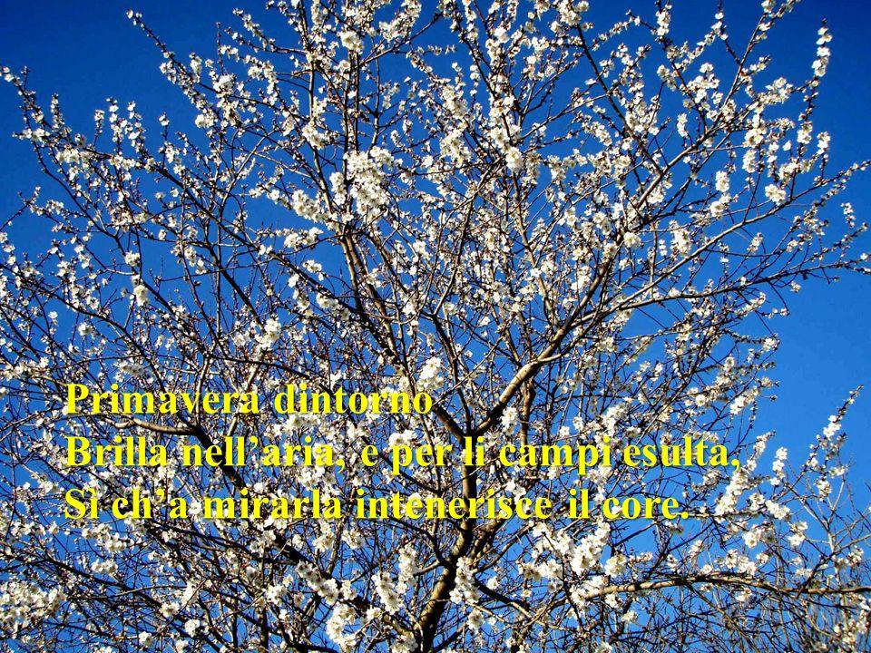 Primavera dintorno Brilla nellaria, e per li campi esulta, Sì cha mirarla intenerisce il core.