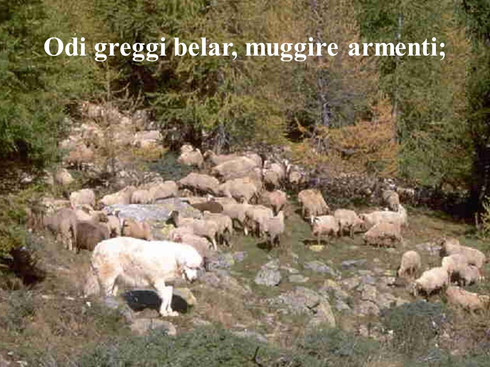 Odi greggi belar, muggire armenti;