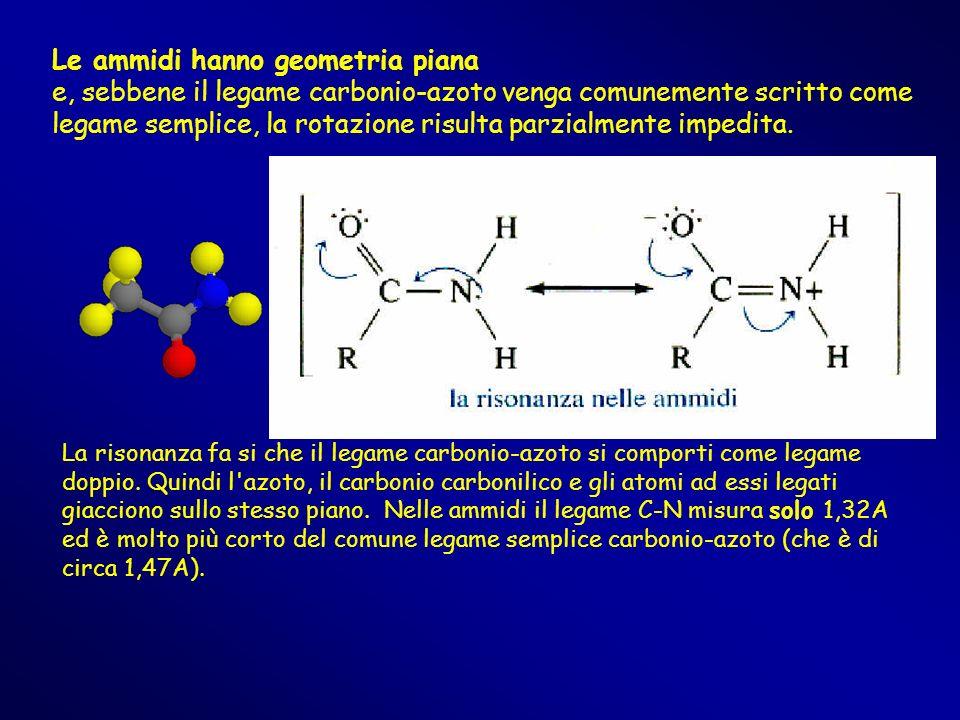 Le ammidi hanno geometria piana e, sebbene il legame carbonio-azoto venga comunemente scritto come legame semplice, la rotazione risulta parzialmente