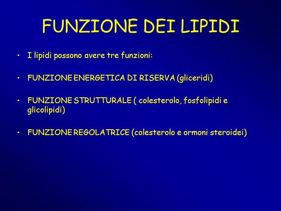 FUNZIONE DEI LIPIDI I lipidi possono avere tre funzioni: FUNZIONE ENERGETICA DI RISERVA (gliceridi) FUNZIONE STRUTTURALE ( colesterolo, fosfolipidi e
